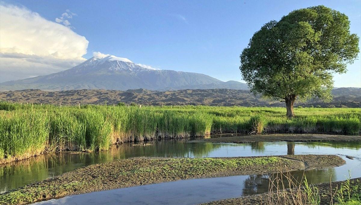 Ağrı Dağı Milli Parkı yaban hayatı zenginliğiyle ilgi çekiyor