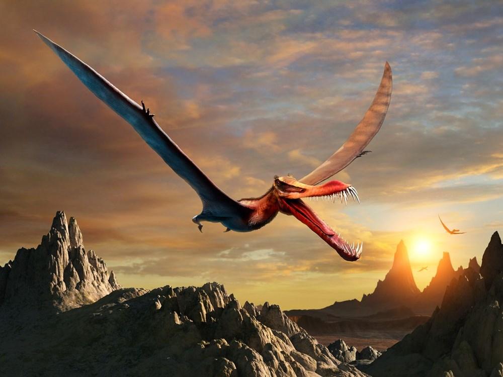 Avustralya'da 105 milyon yıllık teruzor fosili bulundu: Efsanevi bir ejderhaya benzeyen en yakın tür - 6