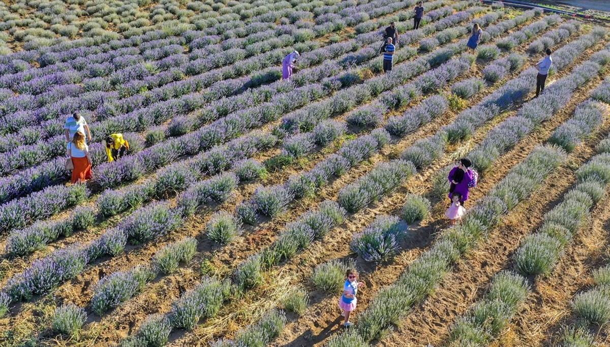 Diyarbakır'ın yeni cazibe merkezi: Lavanta bahçeleri