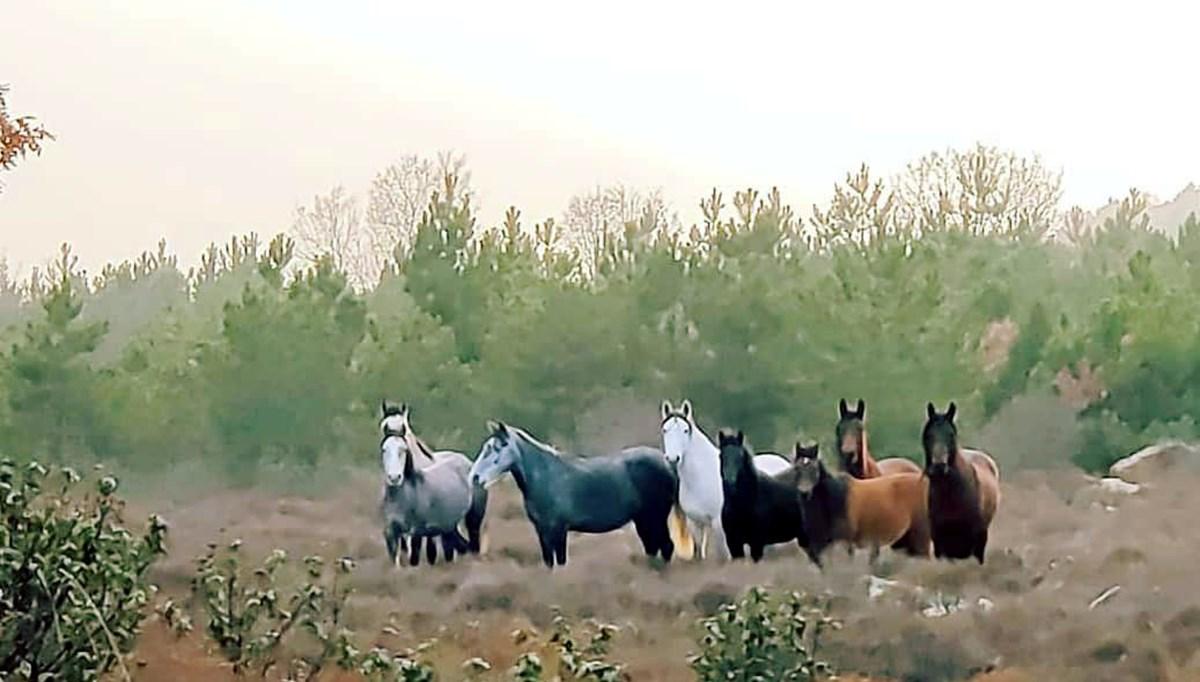 Yılkı atlarıyla 'Anadolu manzarası'