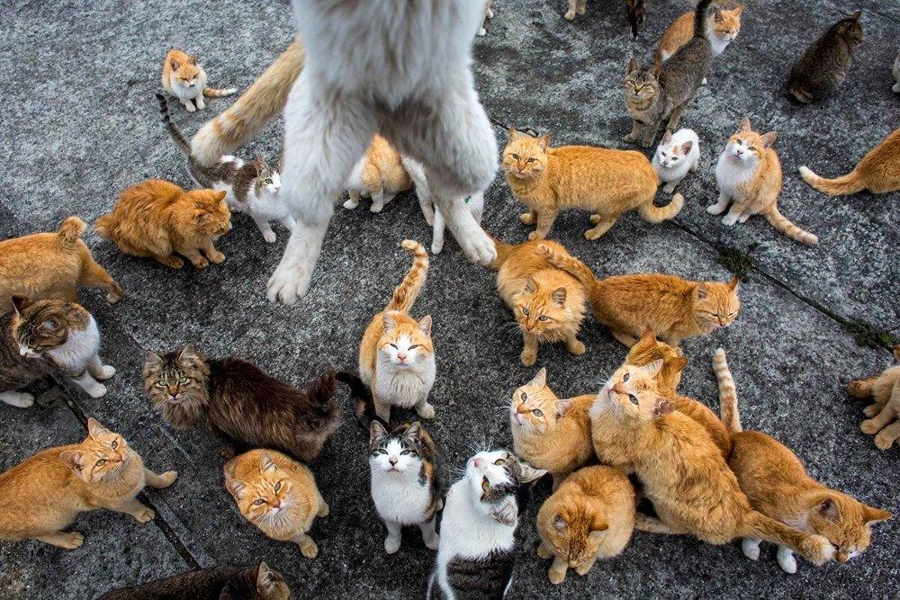 Japonya'daki kedi adası: Aoshima - 9