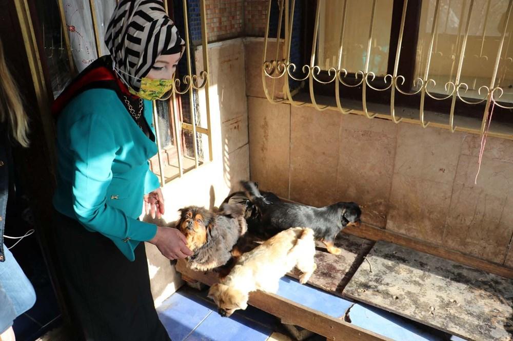 Ankara'da 'medyum'un evine baskın: 20 köpek ve 16 kediye el konuldu - 6