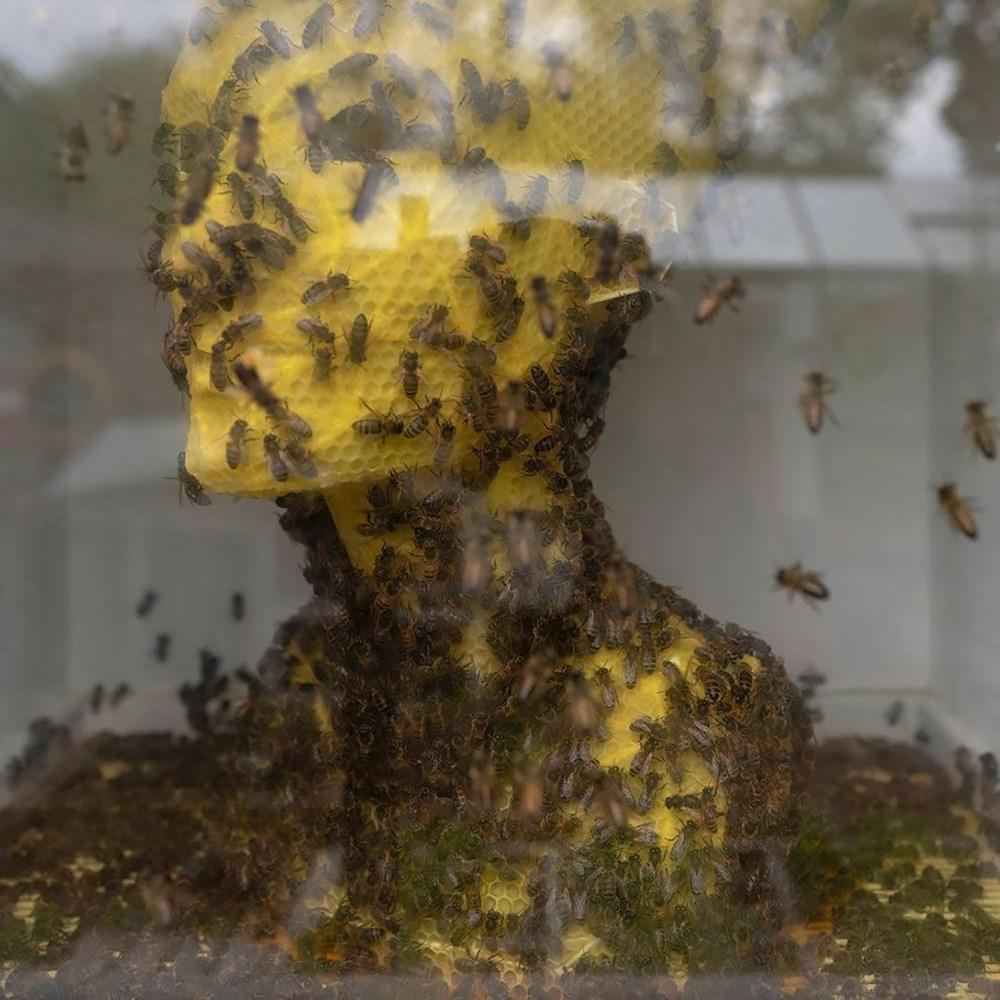 Slovak sanatçı 60 bin bal arısıyla Nefertiti büstü yaptı - 3
