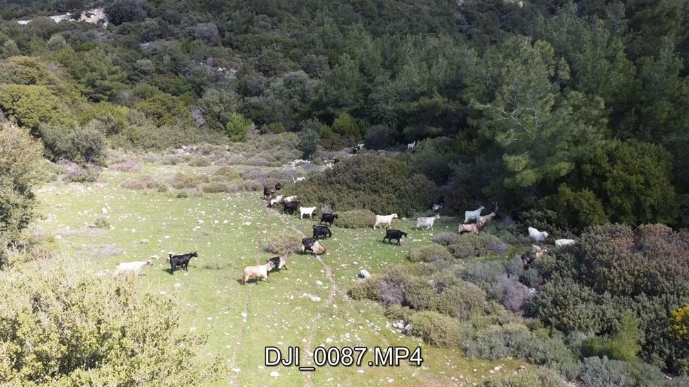 Bodrum'un drone'lu çobanı: Adım adım izliyor - 11