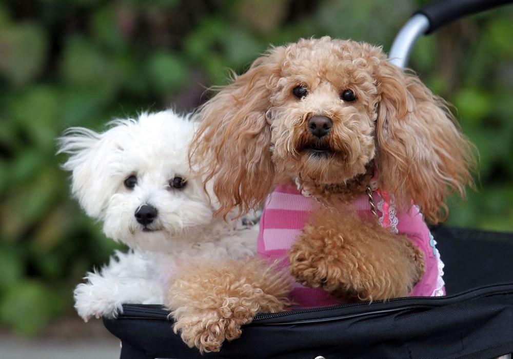 Köpek adları da corona virüsten etkilendi - 7