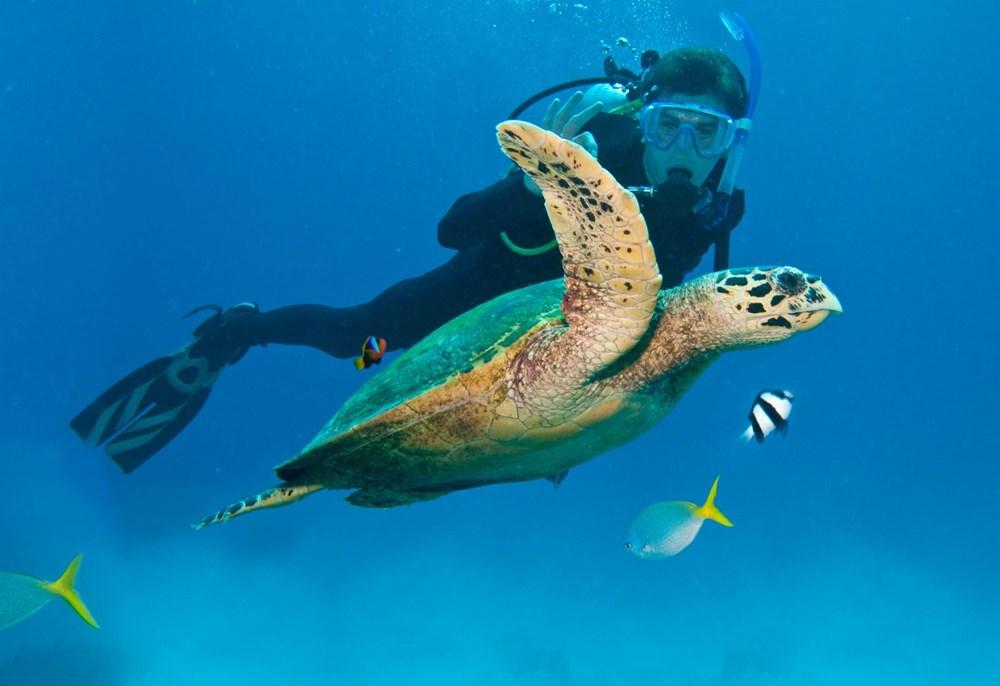 İklim değişikliği, Büyük Set Resifi'ndeki mercanların yarısını yok etti - 12