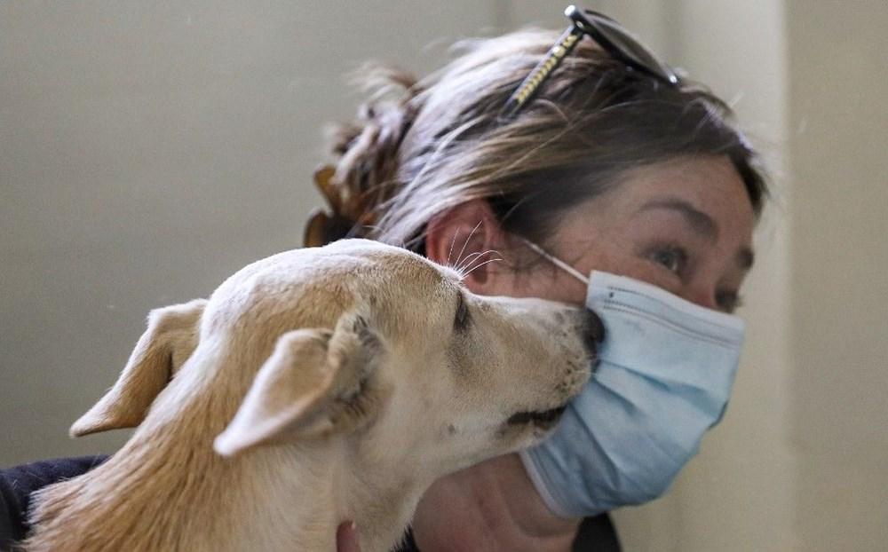 Köpek adları da corona virüsten etkilendi - 2
