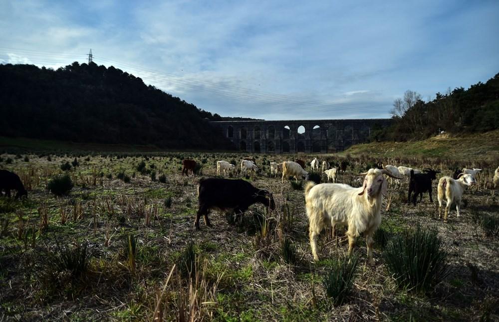 Balıkların yüzdüğü baraj, koyunlara kaldı - 11
