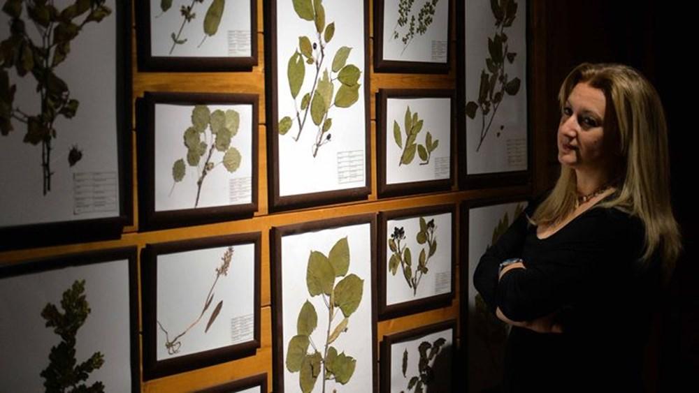 Nadir tabiat varlıklarını gelecek nesillere taşıyan müze: Yenice Doğa ve Hayvan Müzesi - 4