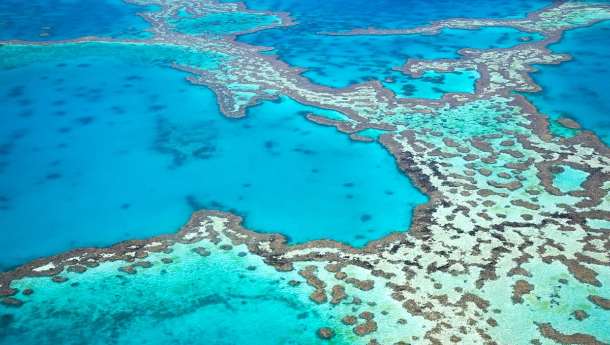 Great Barrier Reef to begin to disappear in 2025 due to climate change