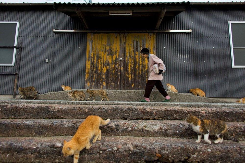 Japonya'daki kedi adası: Aoshima - 17