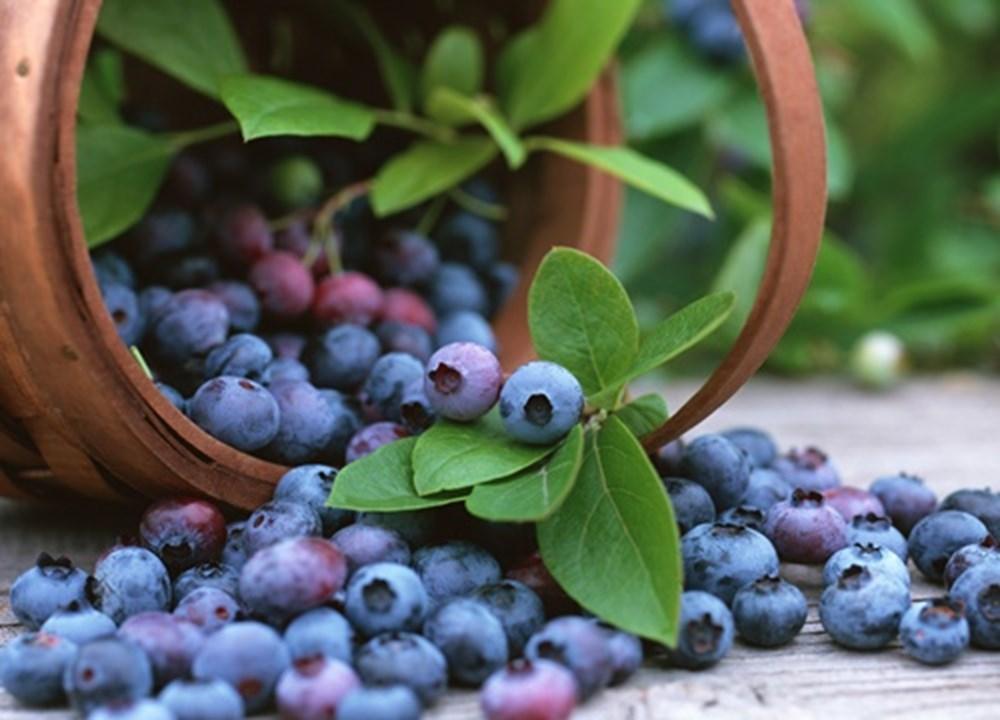 Bağışıklık sistemini güçlendiren besinler (50 sağlıklı besin) - 3