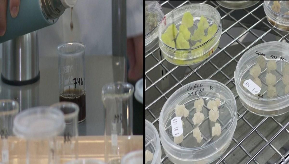 Bilim insanları laboratuvarda kahve üretti: Tadı ve kokusu aynı