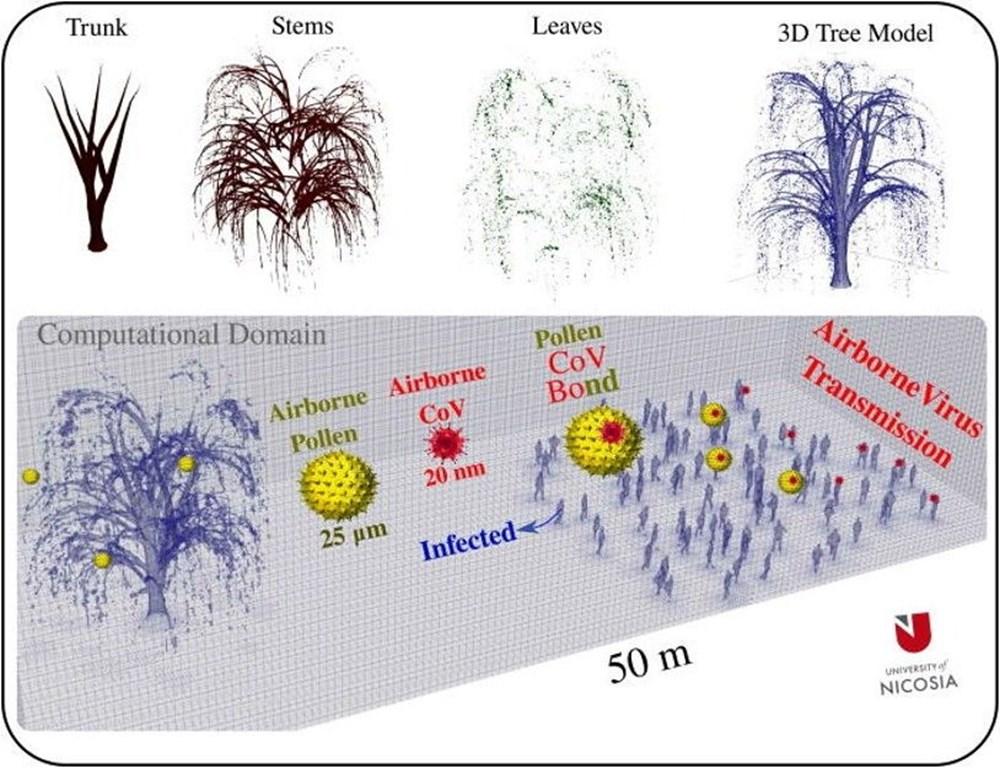 Corona virüs ağaçlardaki polenler aracılığıyla en az 20 metre uzağa yayılıyor - 2