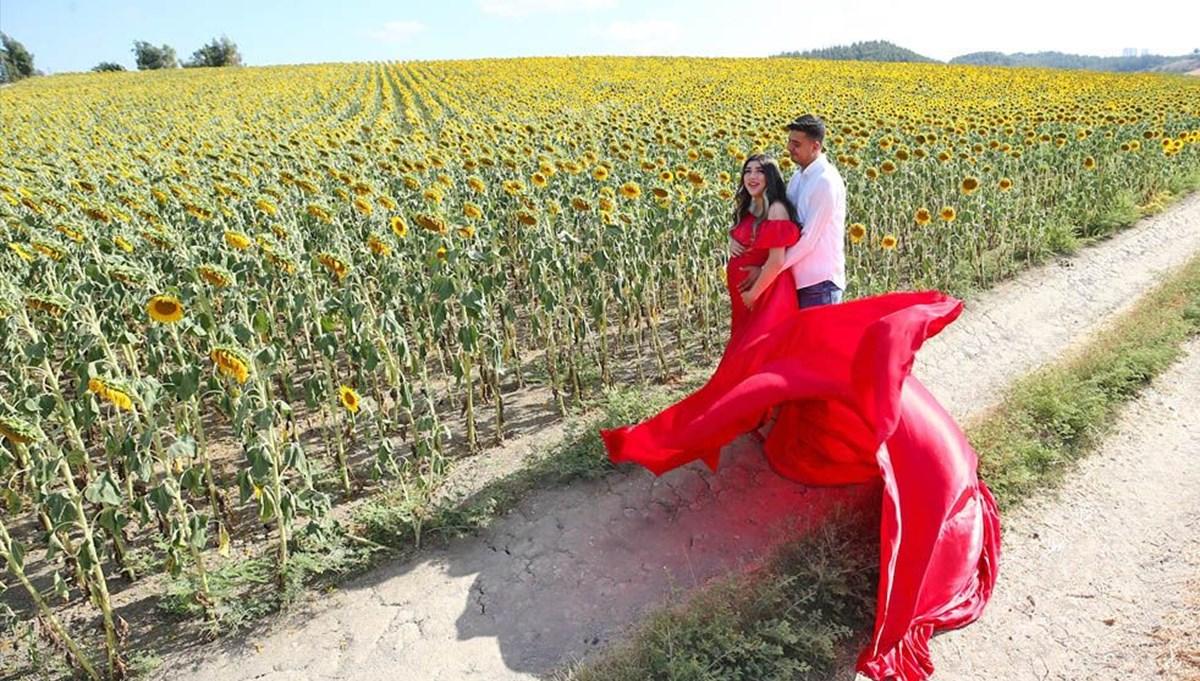 Çukurova'nın ayçiçeği tarlaları doğal fotoğraf stüdyolarını aratmıyor