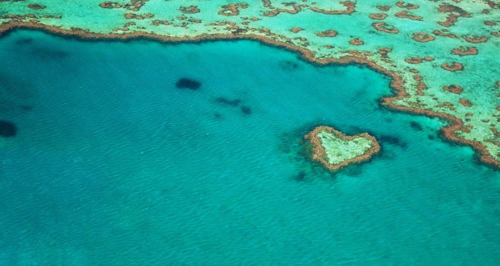 İklim değişikliği, Büyük Set Resifi'ndeki mercanların yarısını yok etti - 11