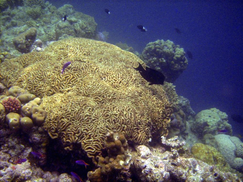 Küresel ısınma, deniz yaşamının kaynağı olan mercan resiflerini yok ediyor - 3