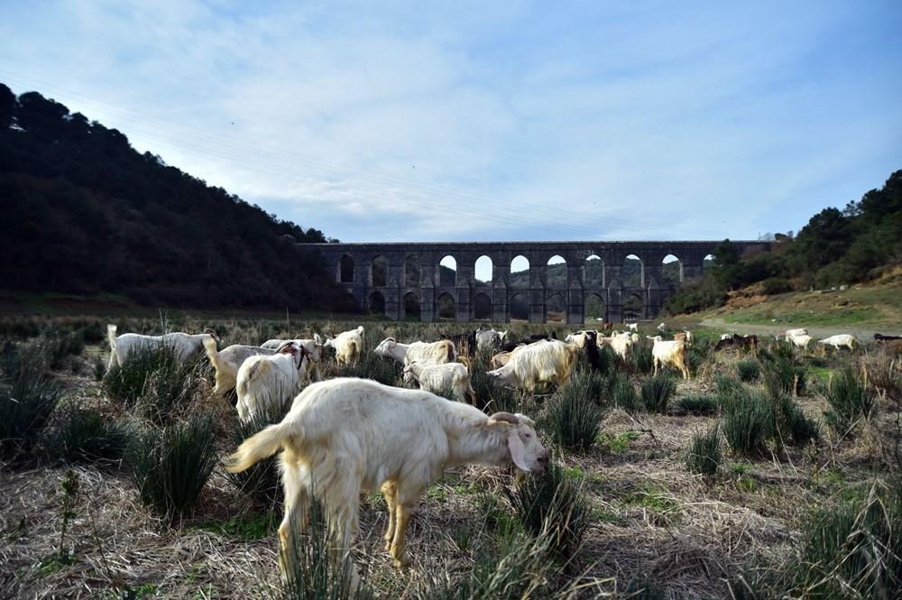 Balıkların yüzdüğü baraj, koyunlara kaldı - 13