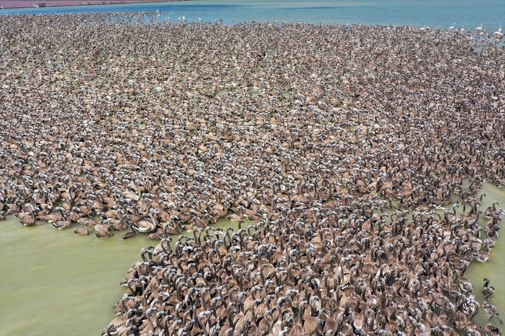 İzmir Kuş Cenneti'nde 18 bini aşkın yavru flamingo kreşte uçma hazırlığı yapıyor - 7