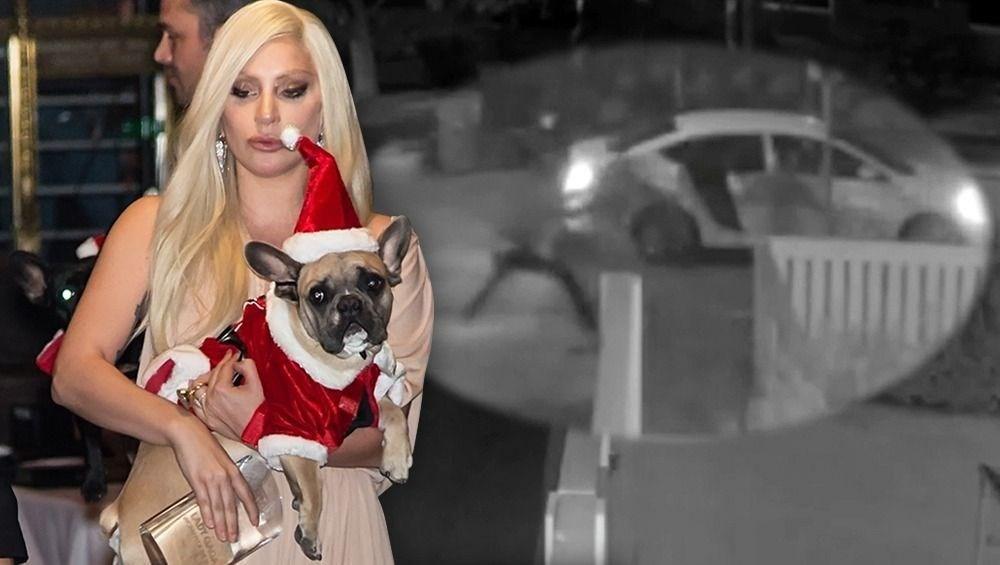 Lady Gaga'nın köpeklerini teslim eden kadın tutuklandı - 1