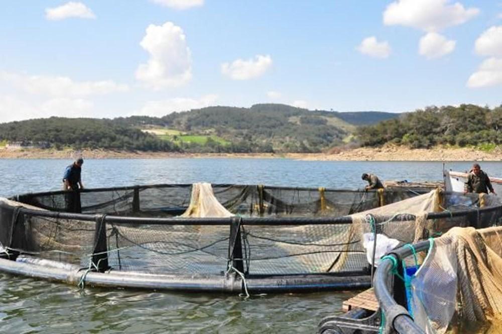 Denizi olmayan Manisa'dan dünyaya balık ihracı - 9
