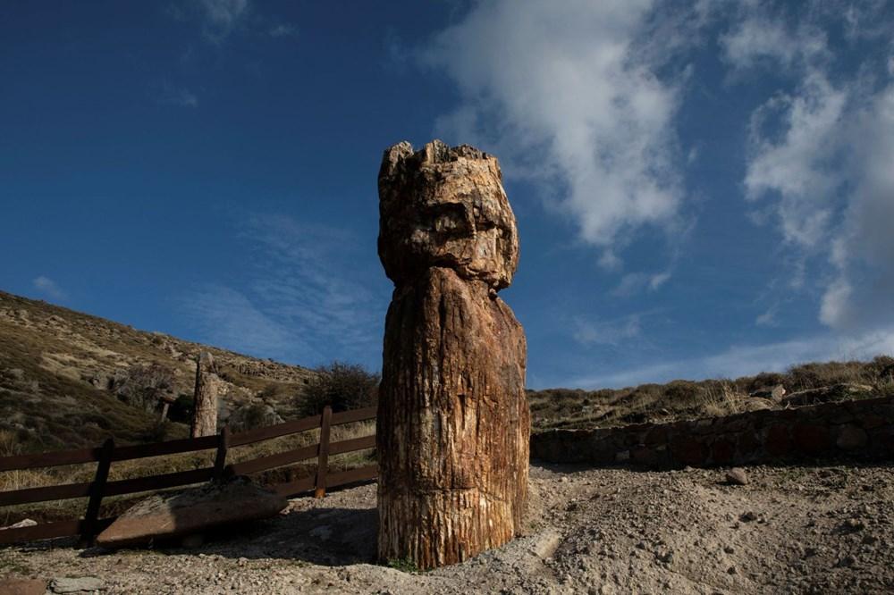 Yunanistan'da 20 milyon yıllık taşlaşmış ağaç bulundu - 5