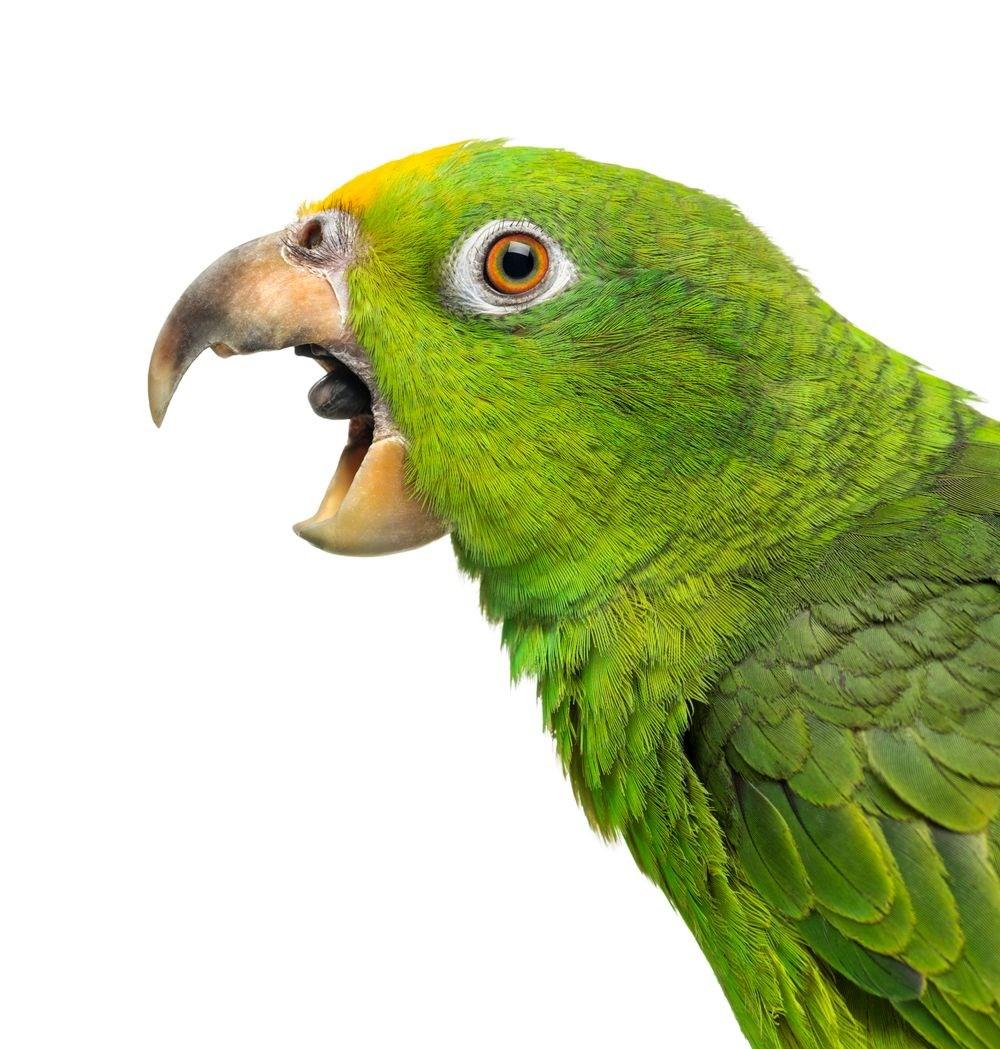 Araştırma: İklim değişikliği nedeniyle hayvanların şekli değişebilir - 2
