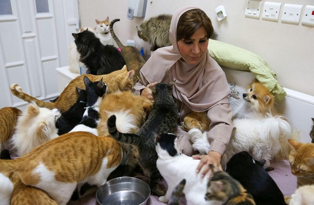 Evinde 480 kedi ve 12 köpeğe bakıyor - 8