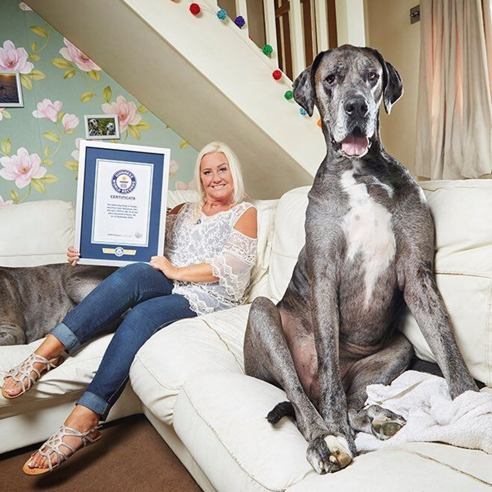Dünyanın en uzun köpeği Freddy hayatını kaybetti - 16