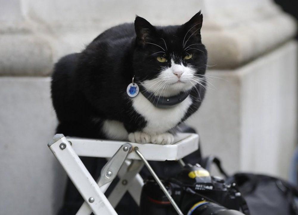 Diplomat kedi Palmerston İngiltere Dışişleri Bakanlığı'ndan emekli oldu - 9