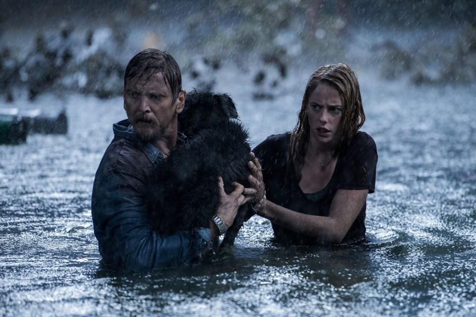 Crawl filminden bir sahne
