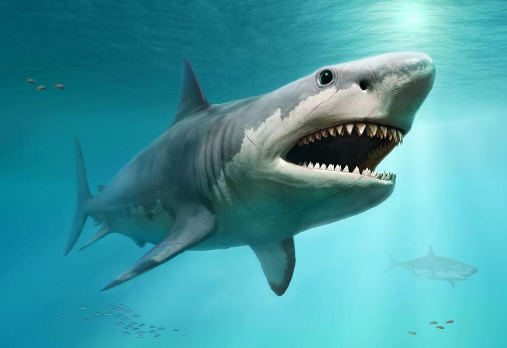 Megalodon köpekbalığının gerçekboyutları ilk kez ortaya çıkarıldı - 2