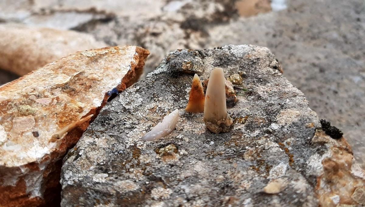 Adıyaman'da milyonlarca yıl öncesine ait balık dişleri bulundu