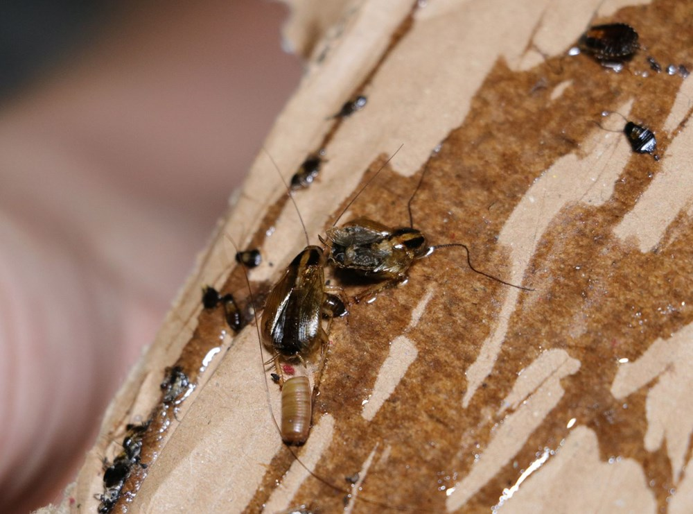 Adana'da bir mahalleyi böcekler istila etti - 2