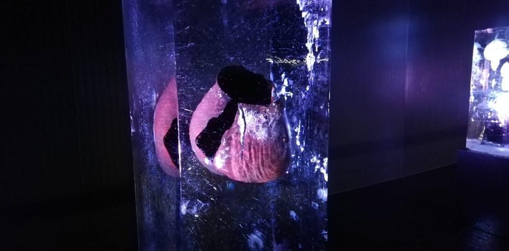 Buz'u sanata dönüştürdüler: Atabuz Müzesi 2021 yılının ilk ayında iki farklı sergiye ev sahipliği yapıyor - 10