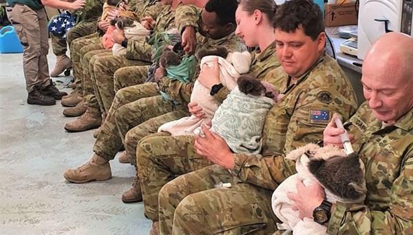 Avustralyalı askerler yangından kurtarılan koalalara bakıyor