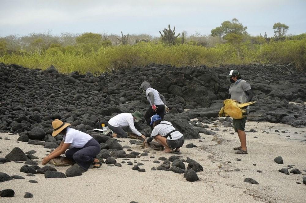 100 yıl önce soyu tükendiği düşünülen dev kaplumbağa Galapagos Adaları'nda bulundu - 5