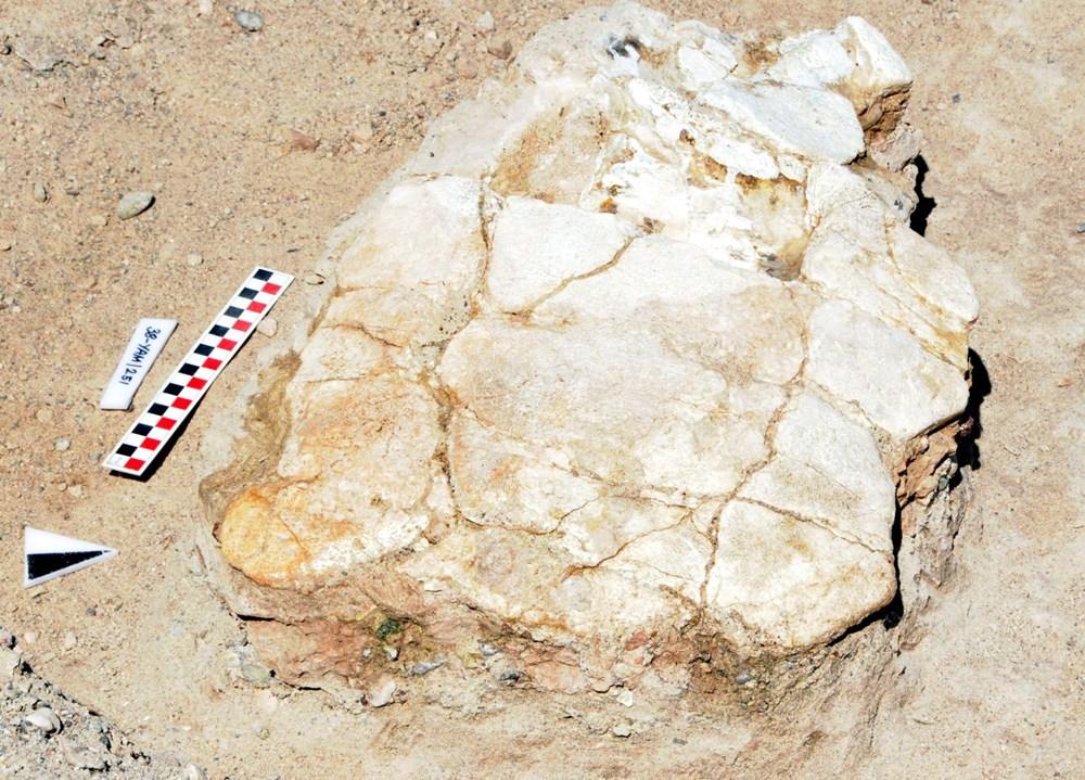 Kayseri'deki ilk kez 7,5 milyon yıllık kaplumbağa fosili bulundu - 2