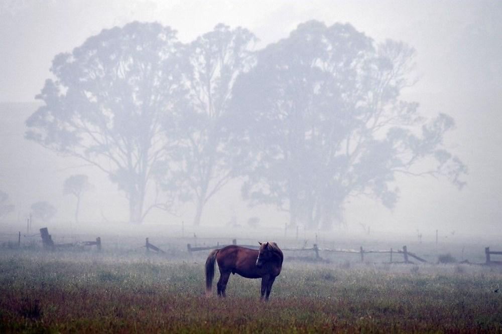 Avustralya'daki yangınlar 3 milyar hayvanı etkiledi - 4
