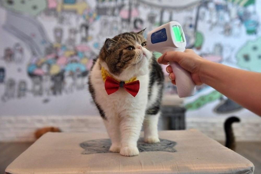 Araştırma: Karantina nedeniyle kediler insanlardan bıktı, sakinleştirici kullanıyorlar - 8