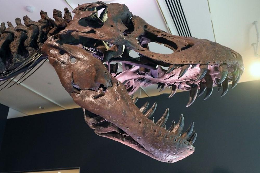 67 milyon yaşındaki dinozor iskeleti açık artırmayla satılacak - 3