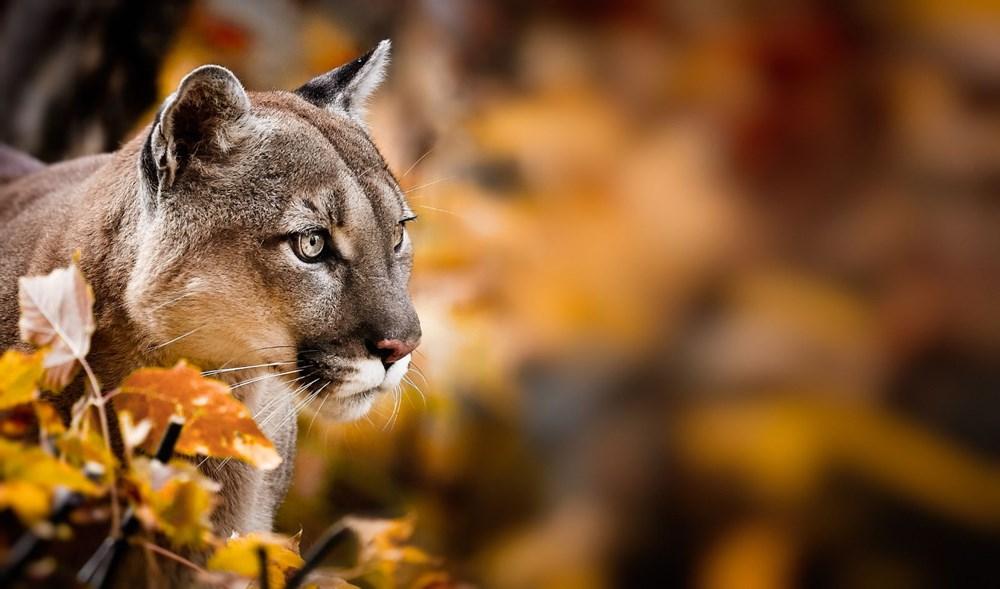 Vahşi yaşamın yüzde 70'i son 50 yılda yok oldu: Milyonlarca yıldır böylesi görülmedi - 4