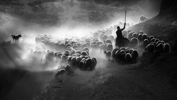 2020 Sony Dünya Fotoğraf YarışmasıTürkiye Ulusal Ödülü'nü kazanan isim belli oldu (Yarışma kısa listesi ve finalistleri)
