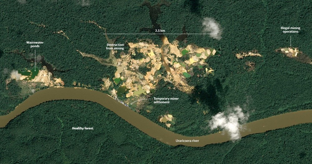 Amazon'un son  kabilesi altın avcıları nedeniyle tehlikede - 9