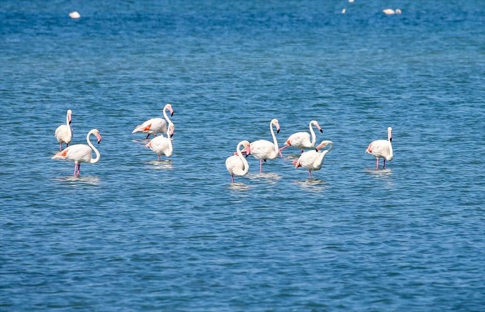 İzmir Kuş Cenneti'nde 18 bini aşkın yavru flamingo kreşte uçma hazırlığı yapıyor - 10