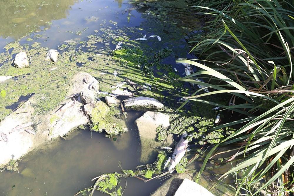 Yatağan Çayı'nda yüzlerce ölü balık kıyıya vurdu - 2
