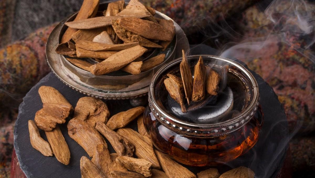 'Udi Hindi' yağı nedir? (Udi Hindi bitkisinin faydaları neler?)