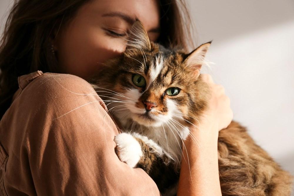 """Bilim insanları """"açık ilişki""""den """"eş bağımlılığa"""" kedilerle insanlar arasındaki 5 ilişki türünü ortaya koydu: Sizin kedilerle aranızda nasıl bir bağ var? - 4"""