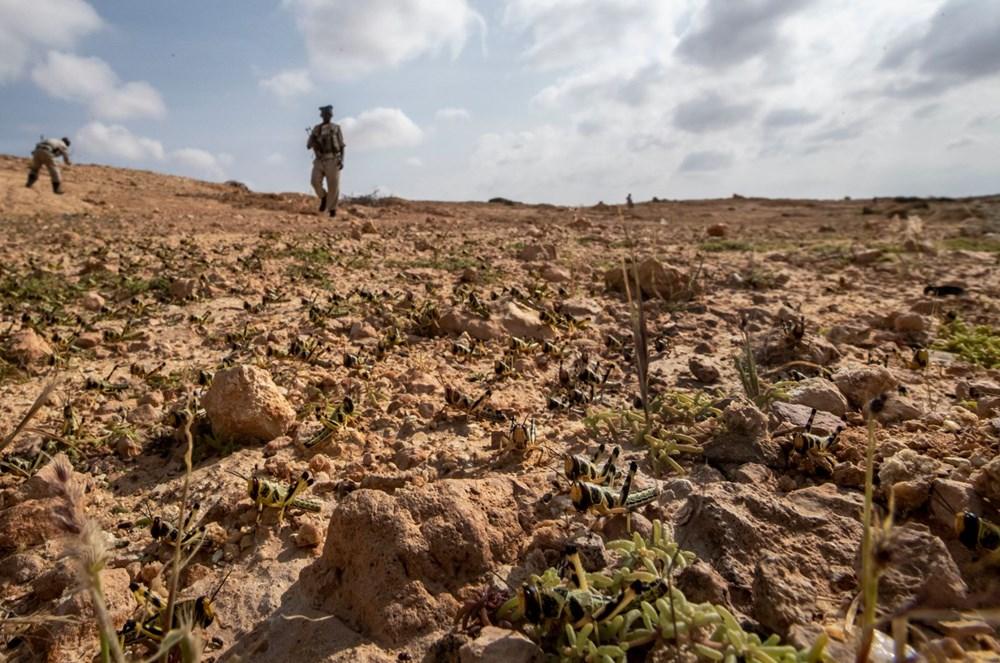 Somali, çekirge istilası nedeniyle OHAL ilan etti - 5