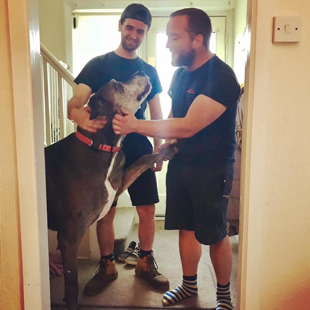Dünyanın en uzun köpeği Freddy hayatını kaybetti - 19